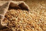 craft barley malt